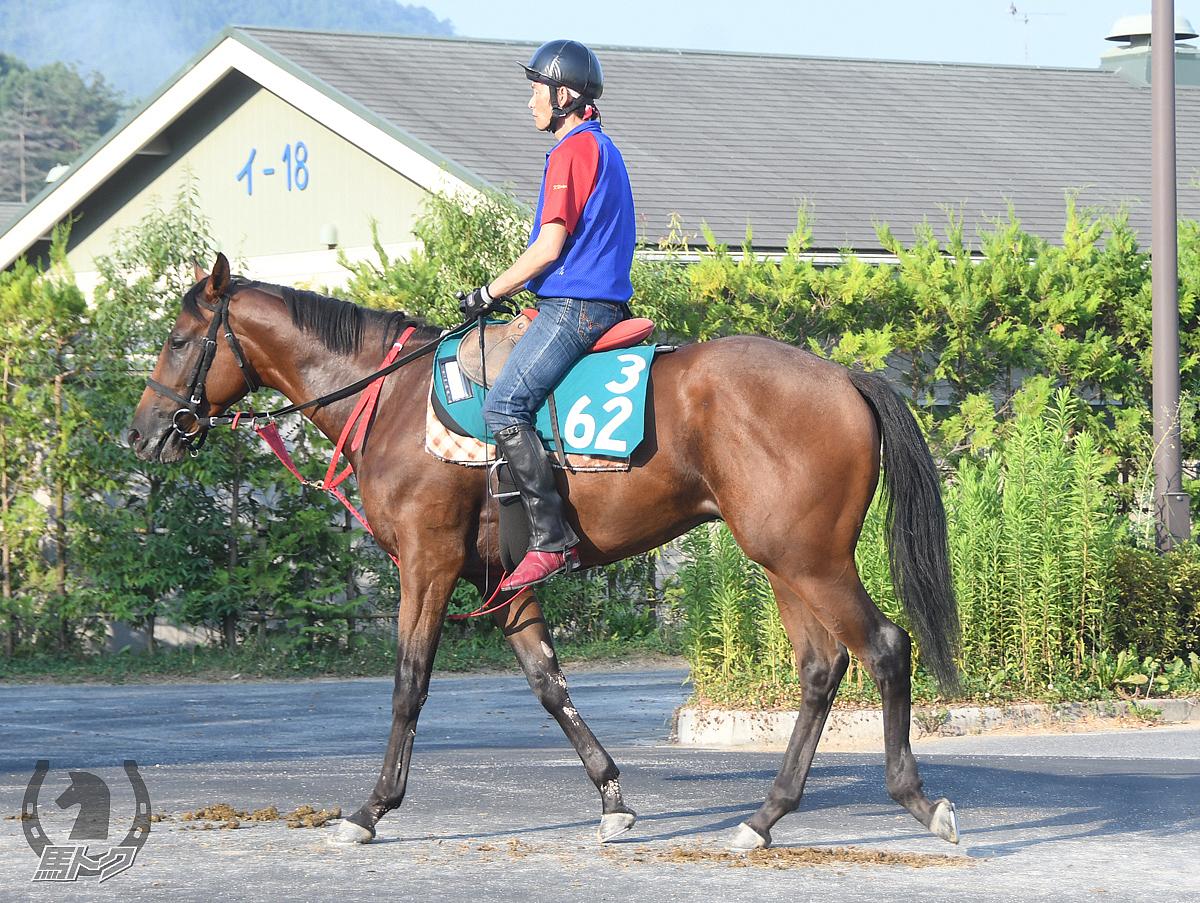 クリノボルサリーノの馬体写真