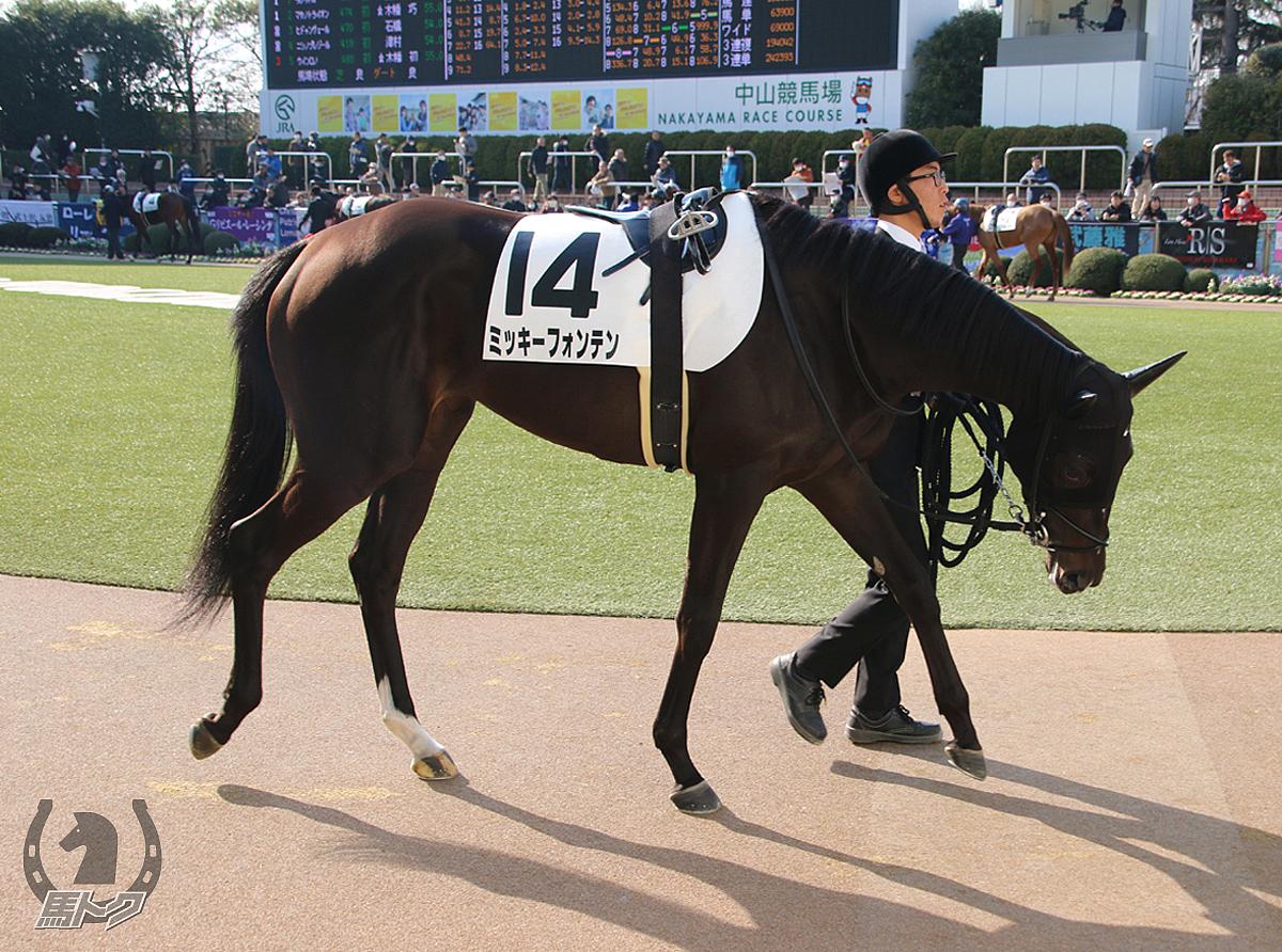 ミッキーフォンテンの馬体写真