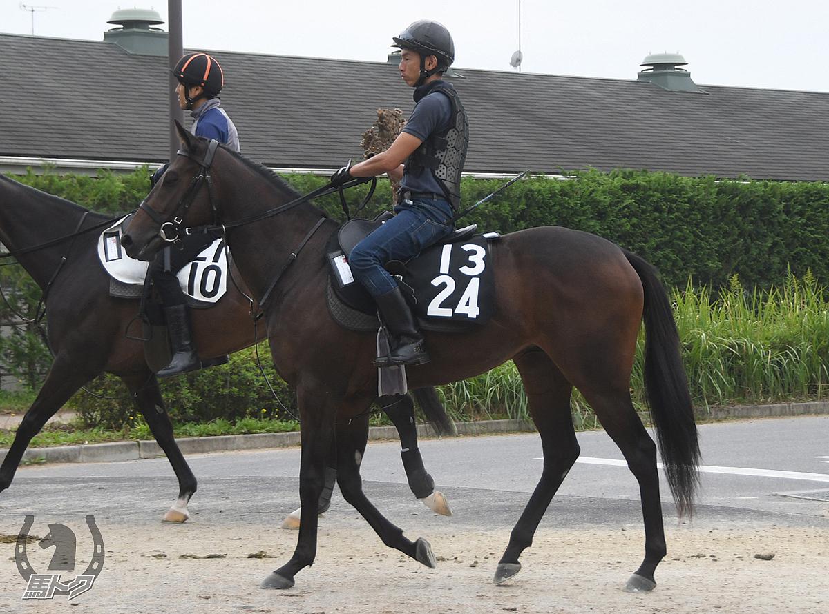 ラハイナヌーンの馬体写真