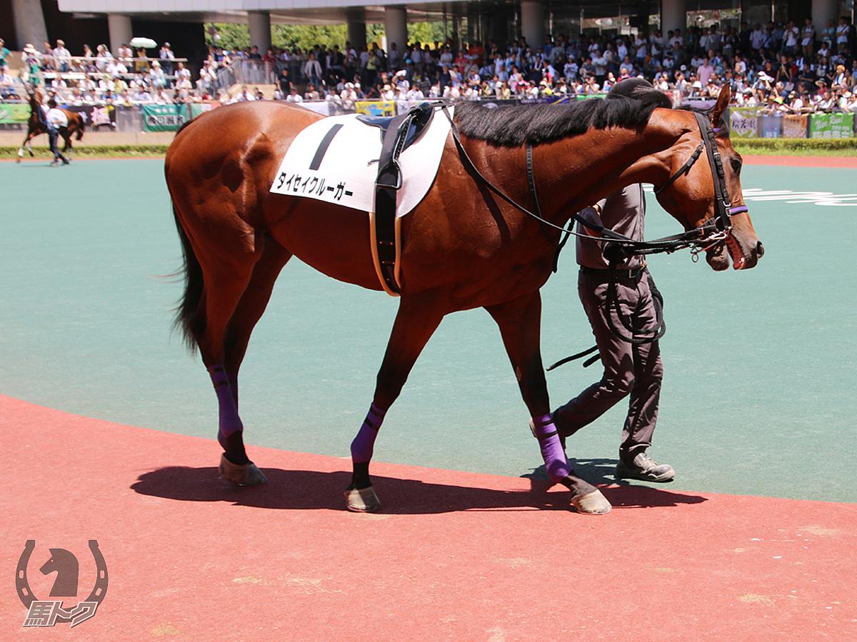 タイセイクルーガーの馬体写真