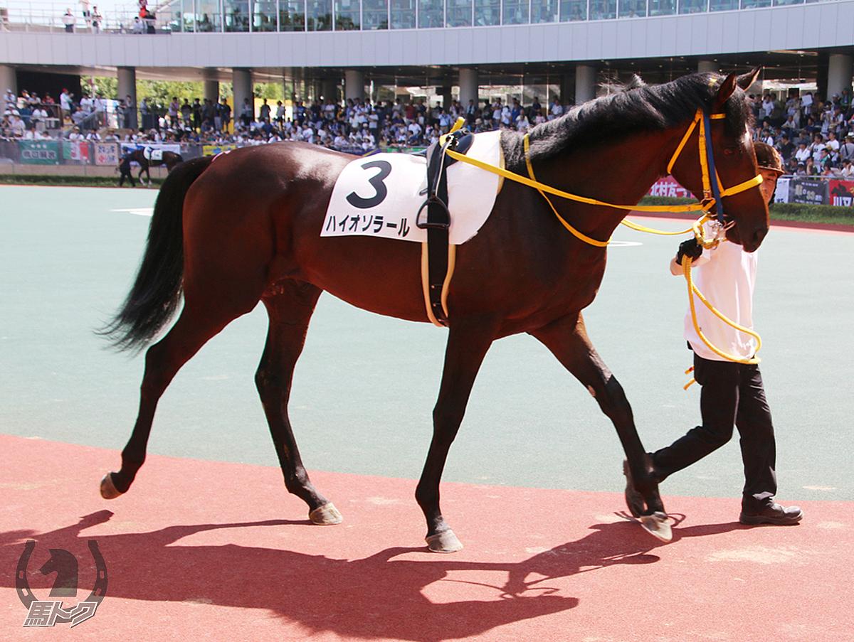 ハイオソラールの馬体写真