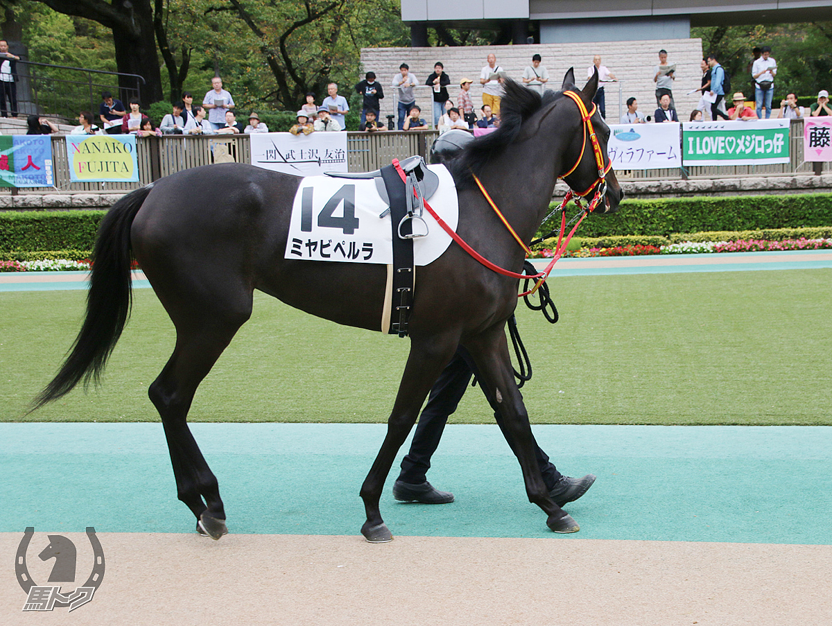 ミヤビペルラの馬体写真
