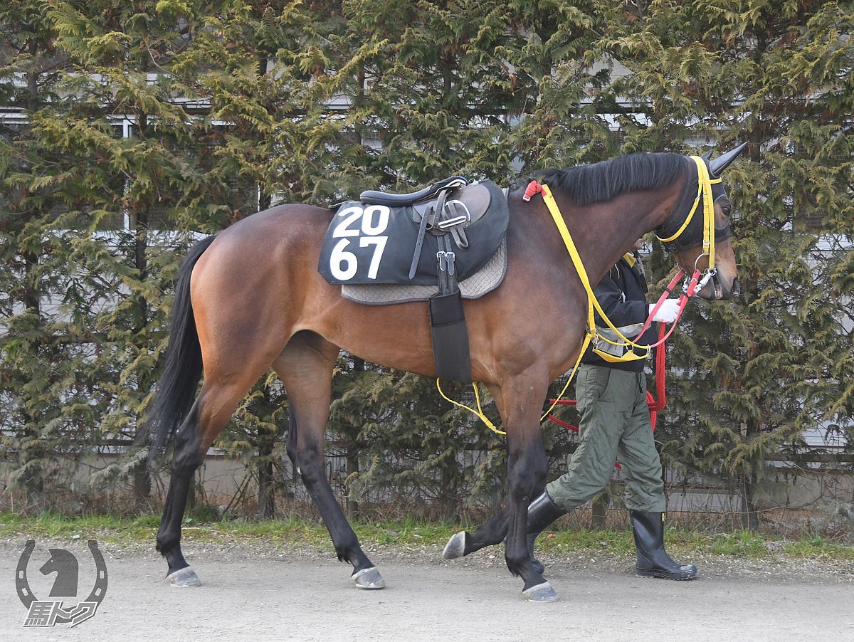 ミスレイナの馬体写真