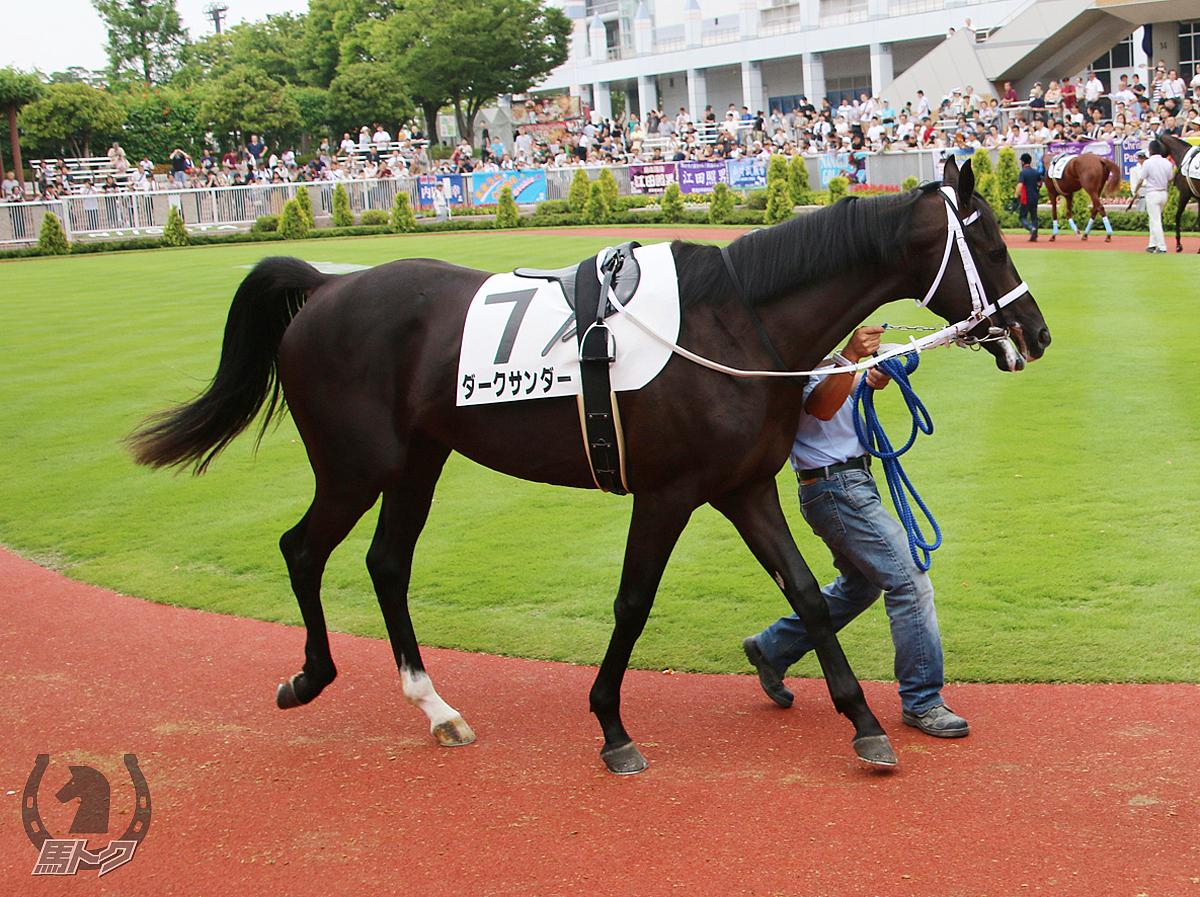 ダークサンダーの馬体写真