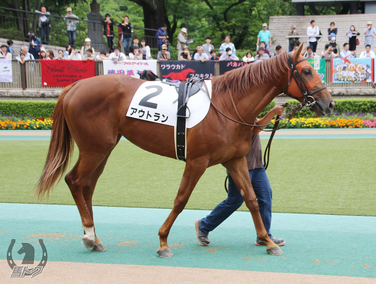アウトランの馬体写真