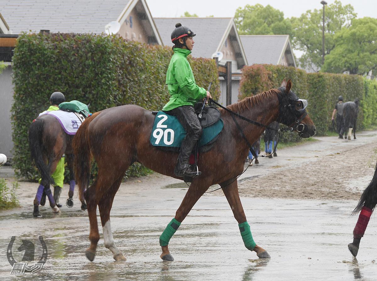 アヴァンティストの馬体写真