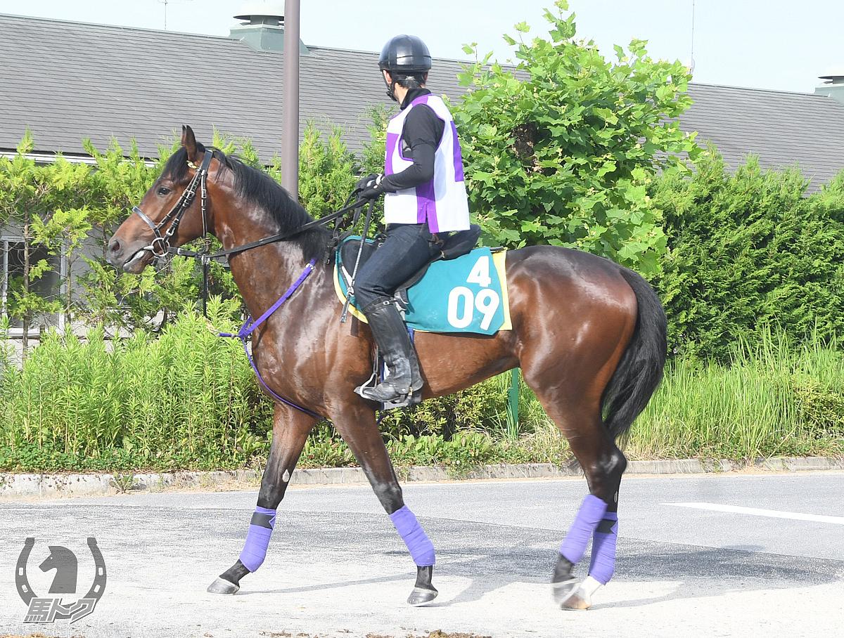 イズジョークラウンの馬体写真