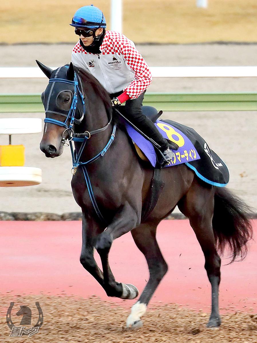 コパノマーティンの馬体写真