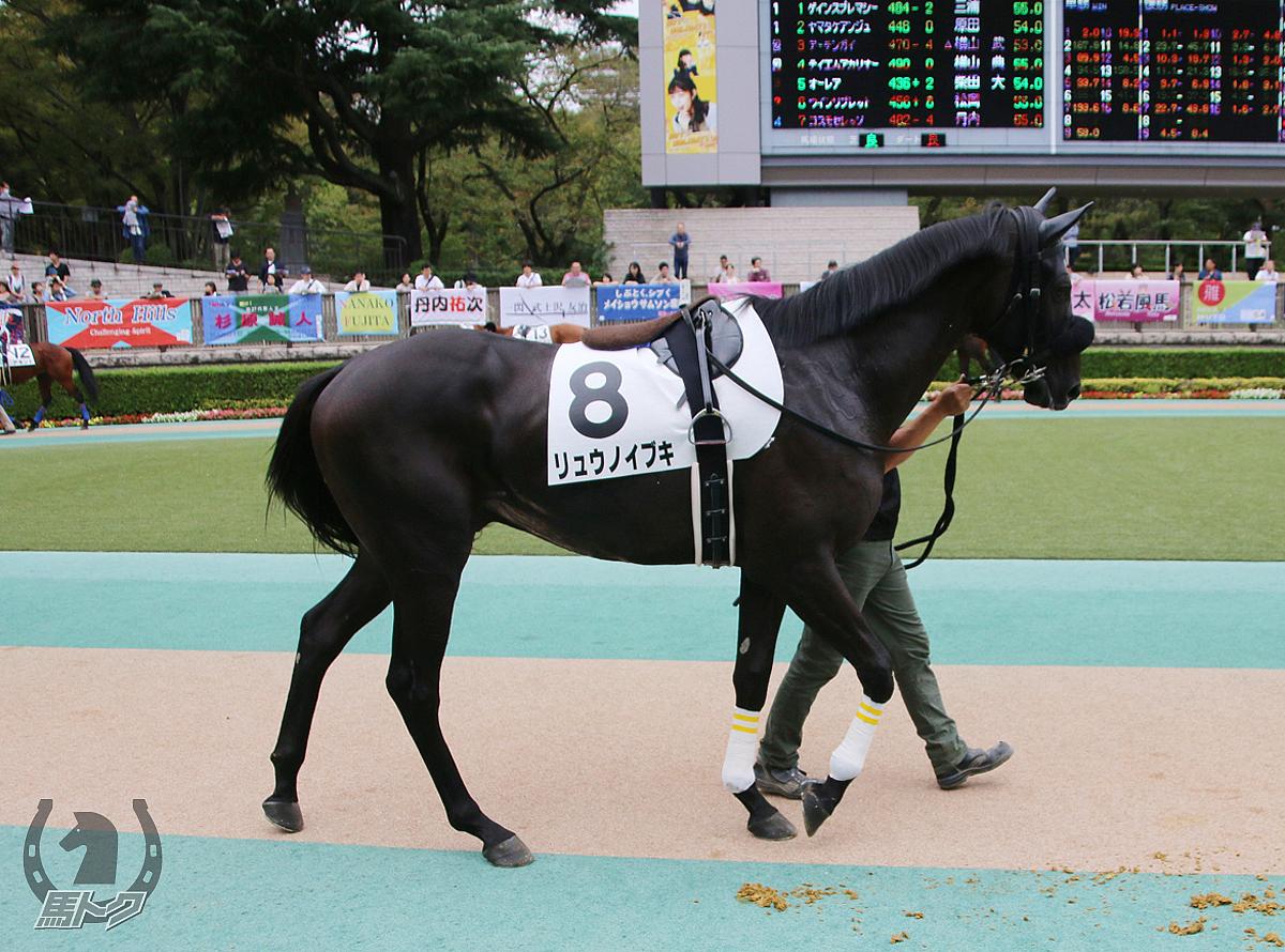 リュウノイブキの馬体写真