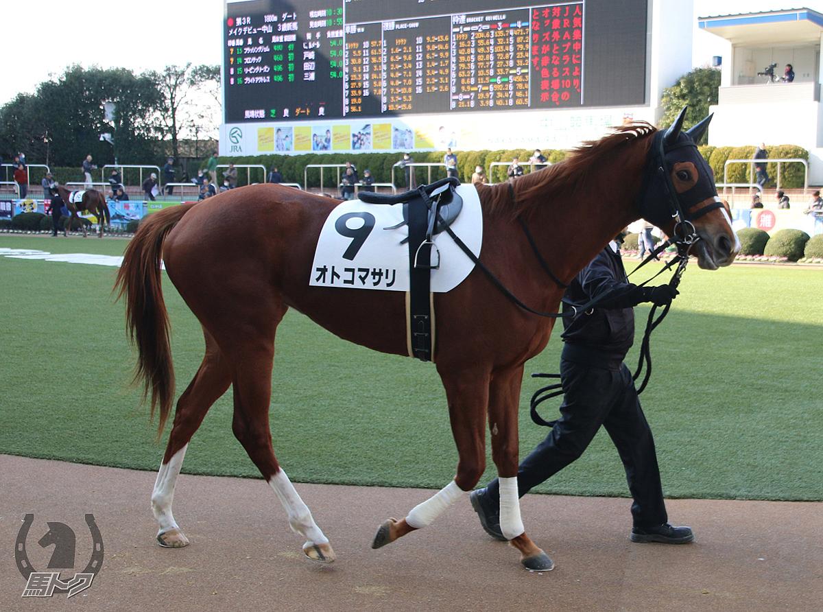 オトコマサリの馬体写真