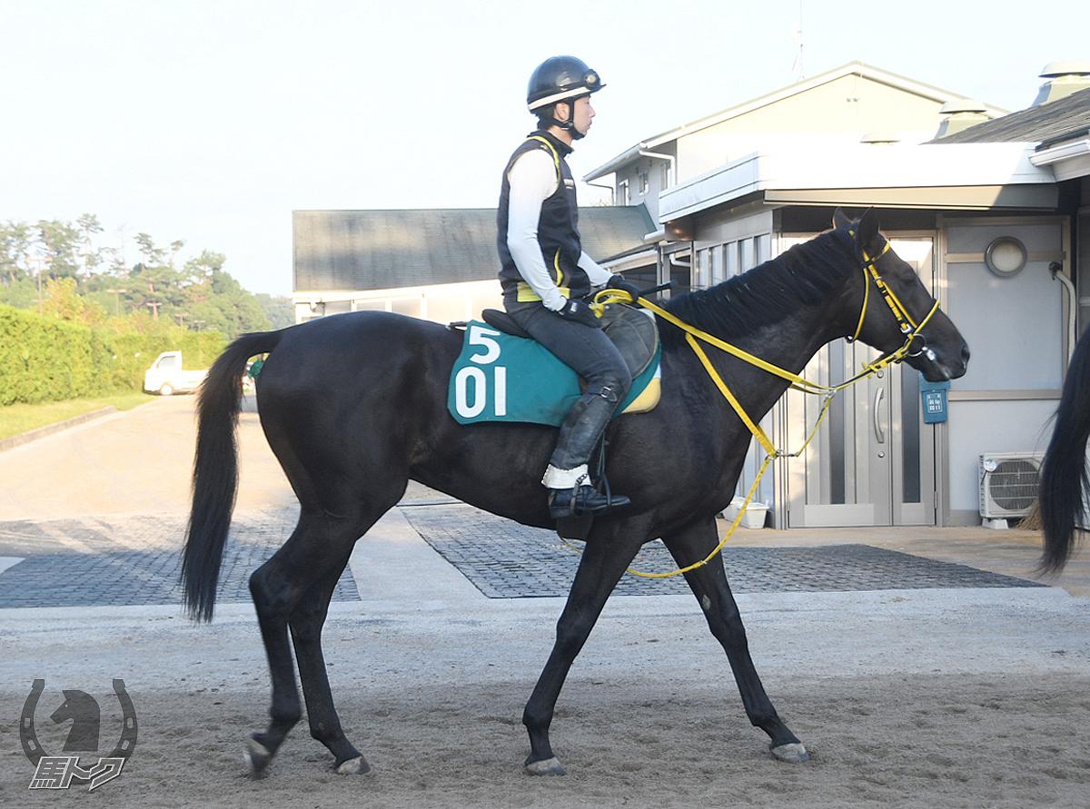 ハイロードシチーの馬体写真