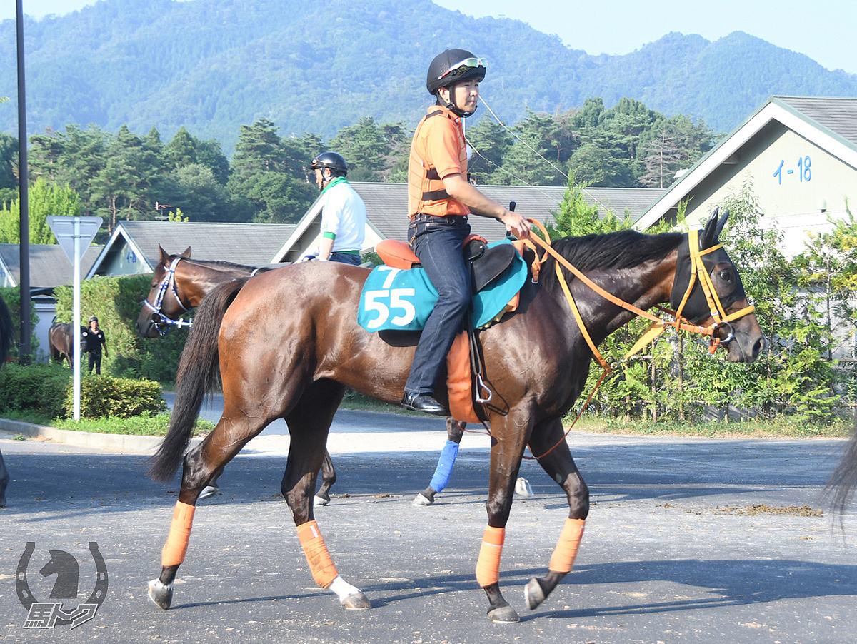 オレンジオレンジの馬体写真