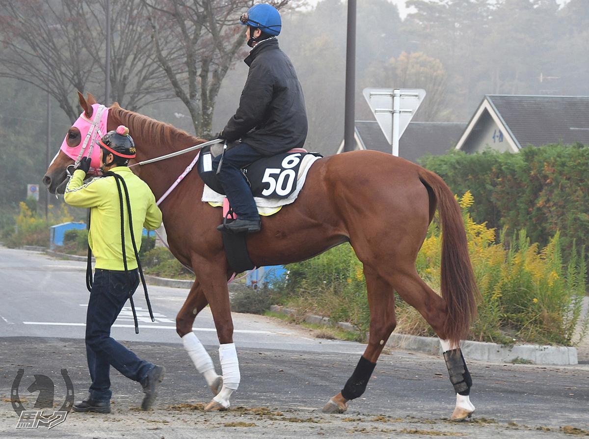 テイエムブランコの馬体写真