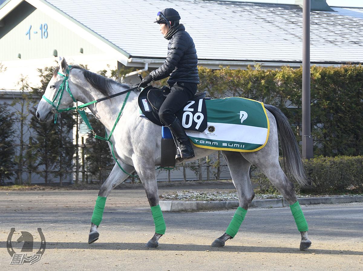 パイオニアプライドの馬体写真