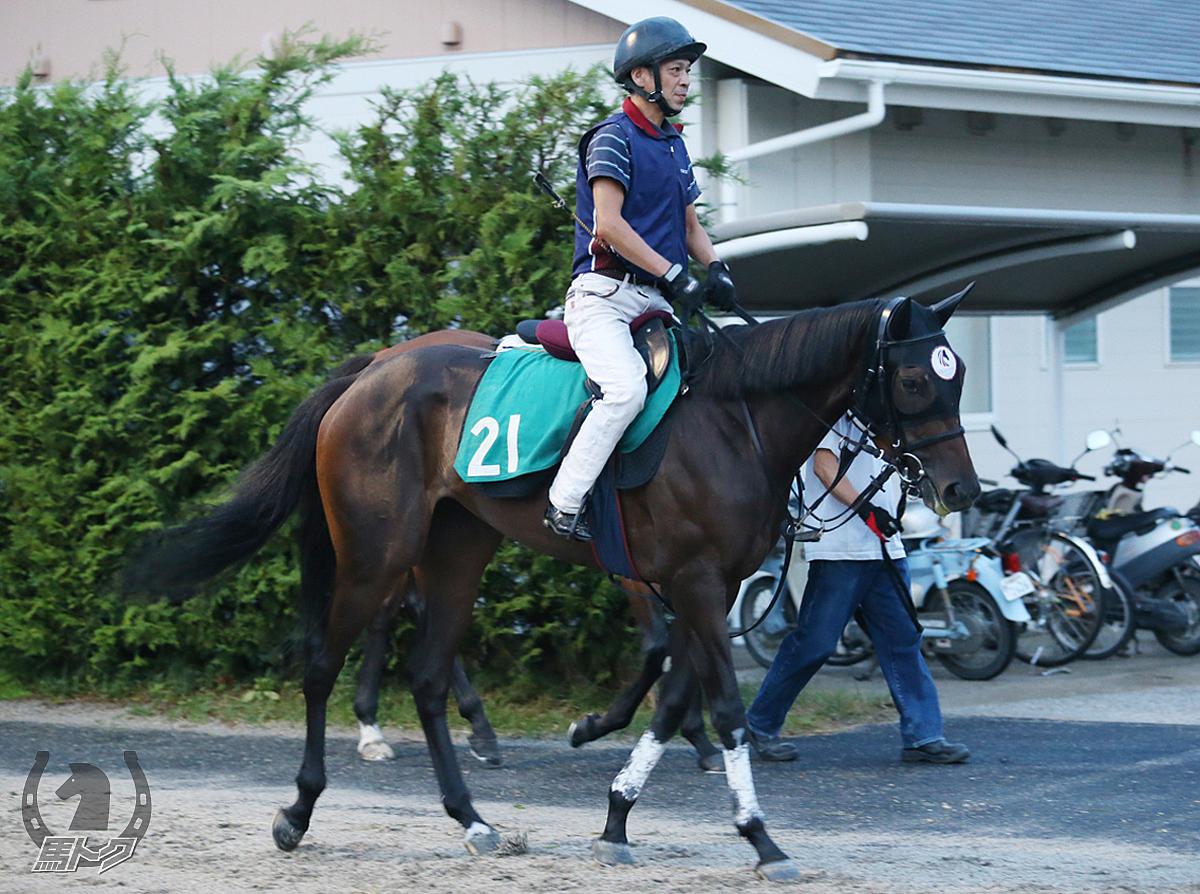 カモンビューティーの馬体写真