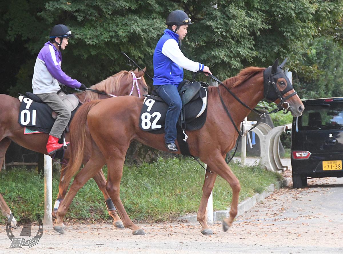 ミアフィリアの馬体写真