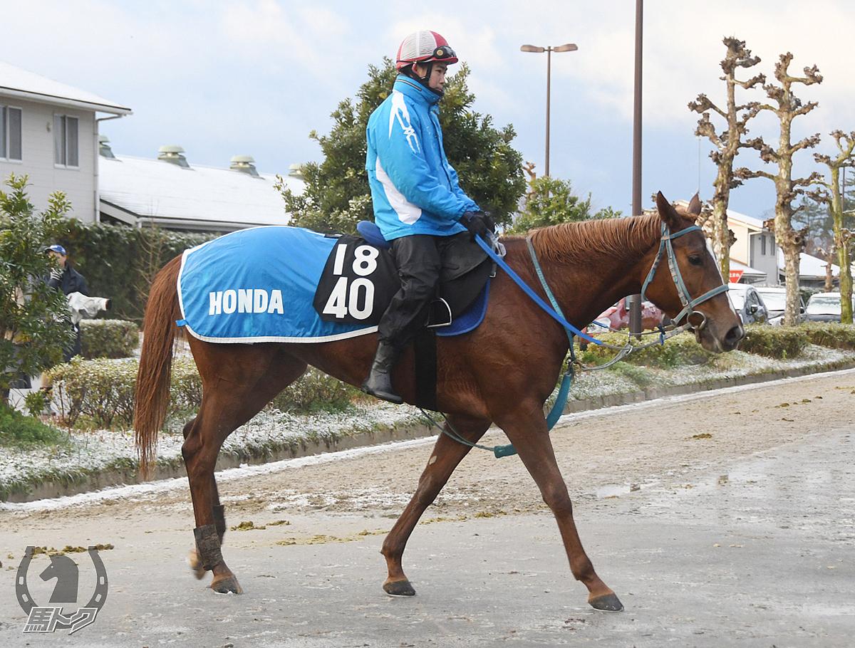 ダンツシャープの馬体写真