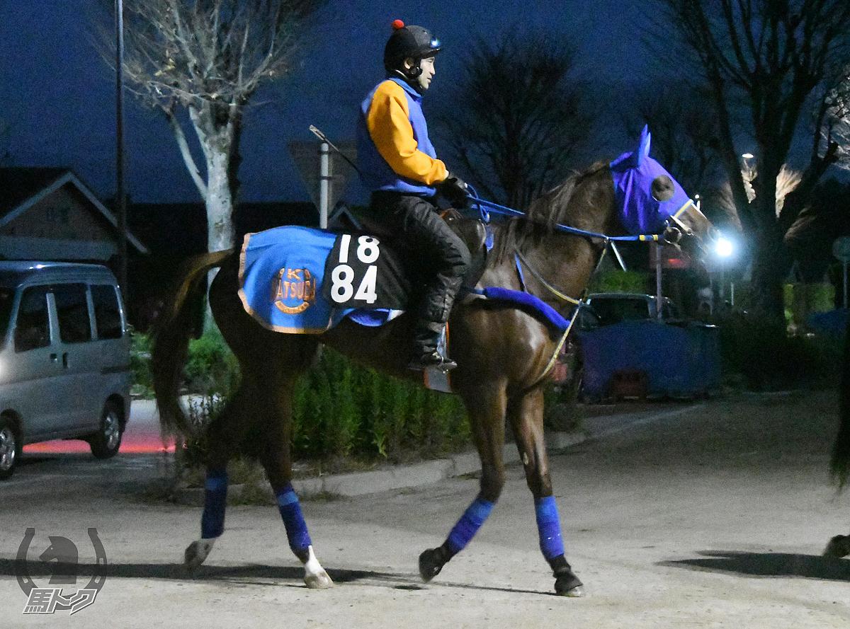オリーブティアラの馬体写真