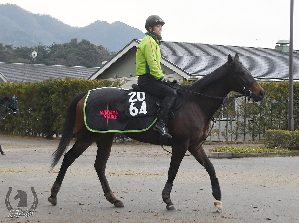 カラスミヤビの馬体写真