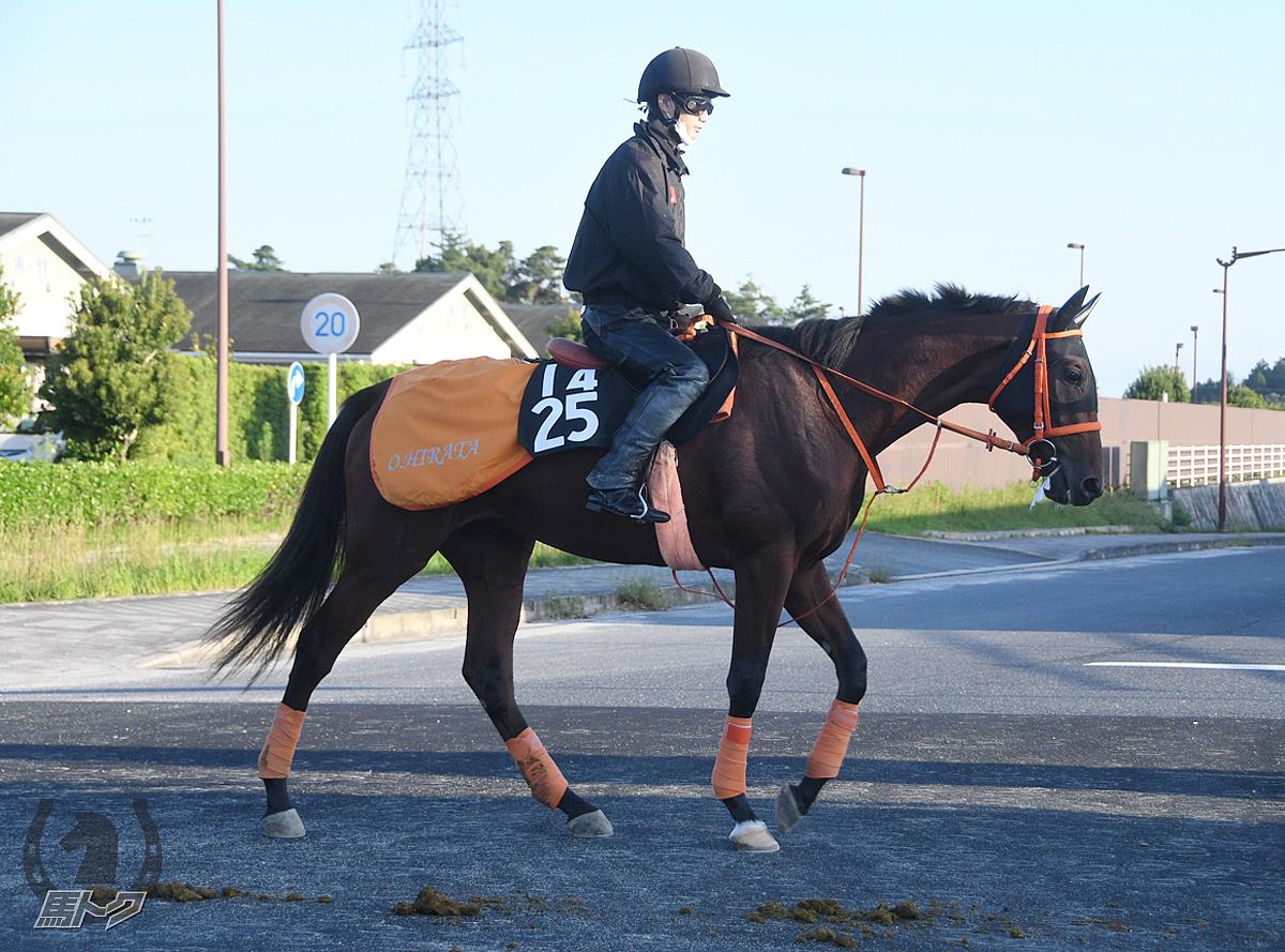 リリーブラックシーの馬体写真