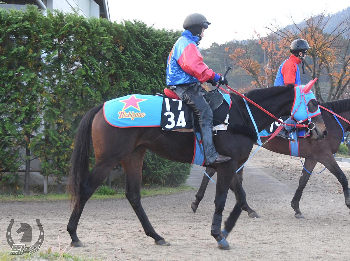 ワインレッドローズの馬体写真
