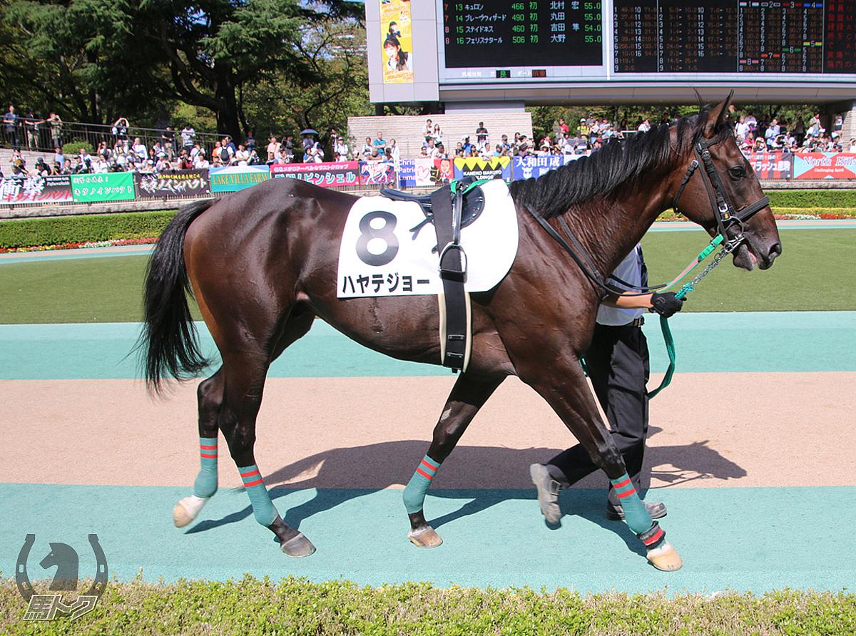 ハヤテジョーの馬体写真