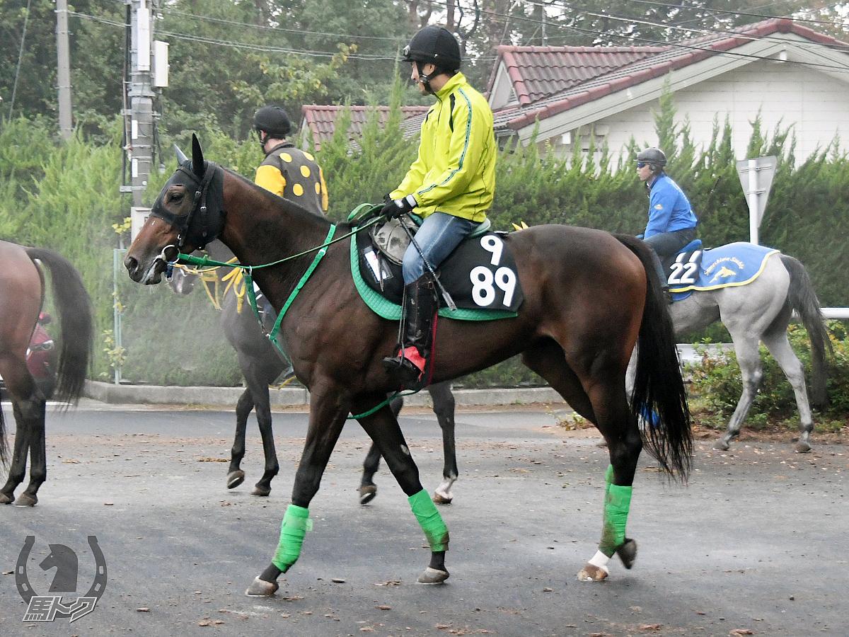 ミッキーバディーラの馬体写真
