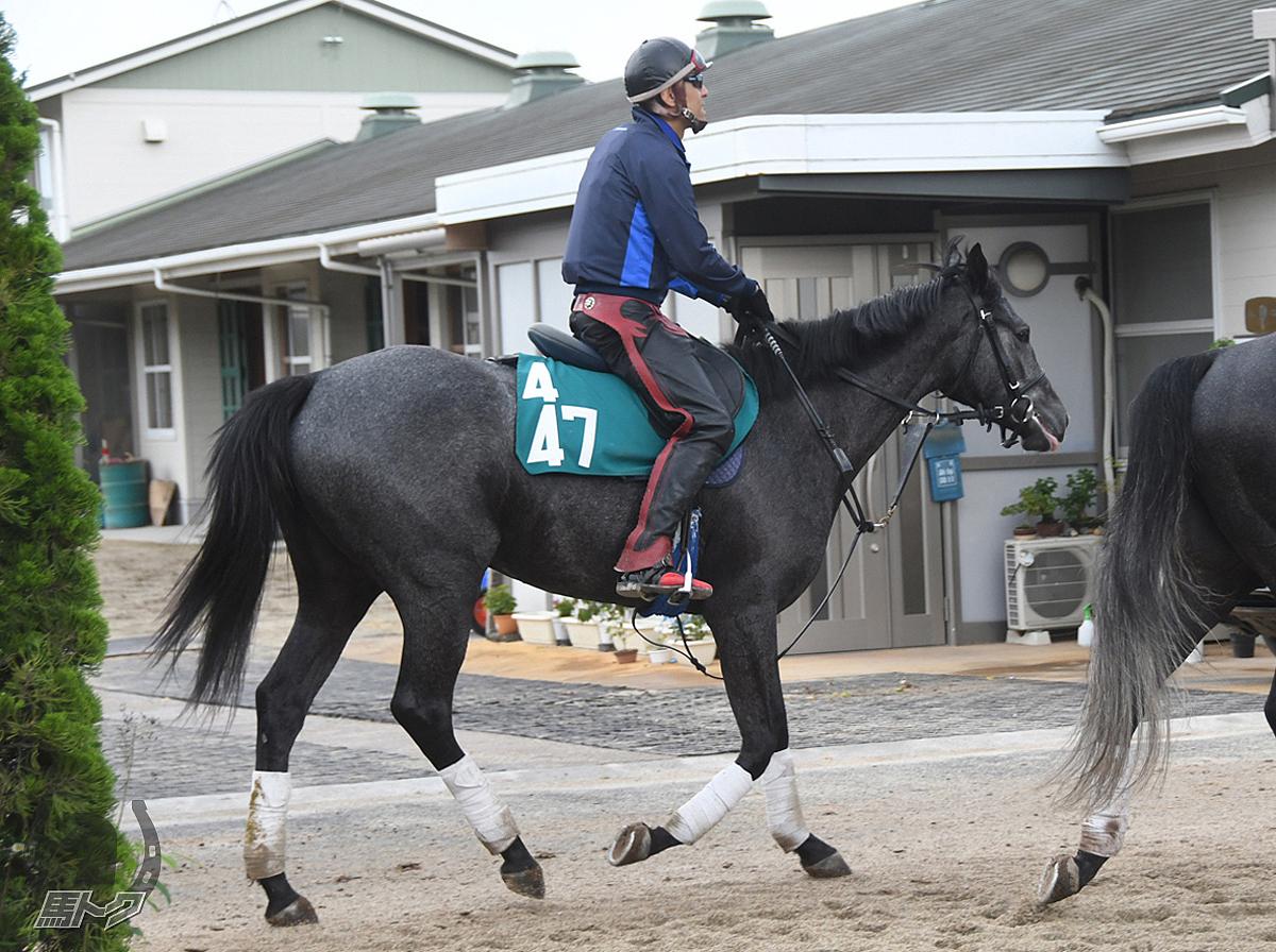 プティットフィーユの馬体写真