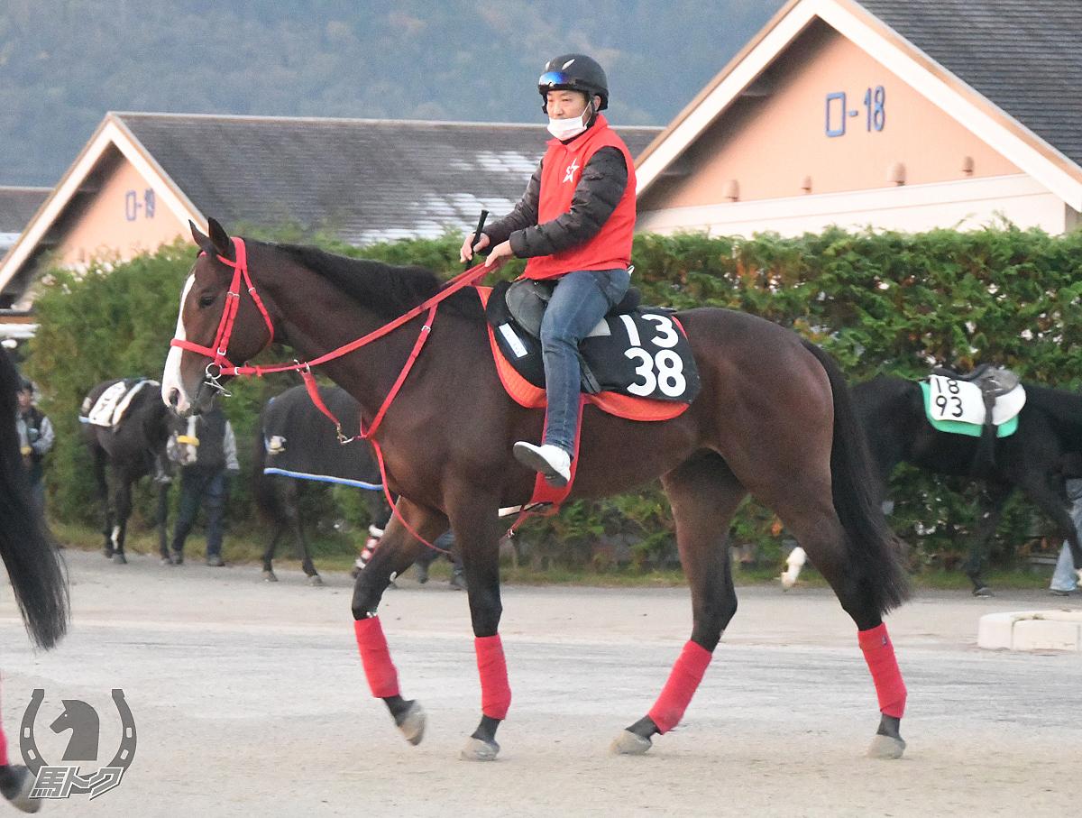 ミヤジハヤカゼの馬体写真