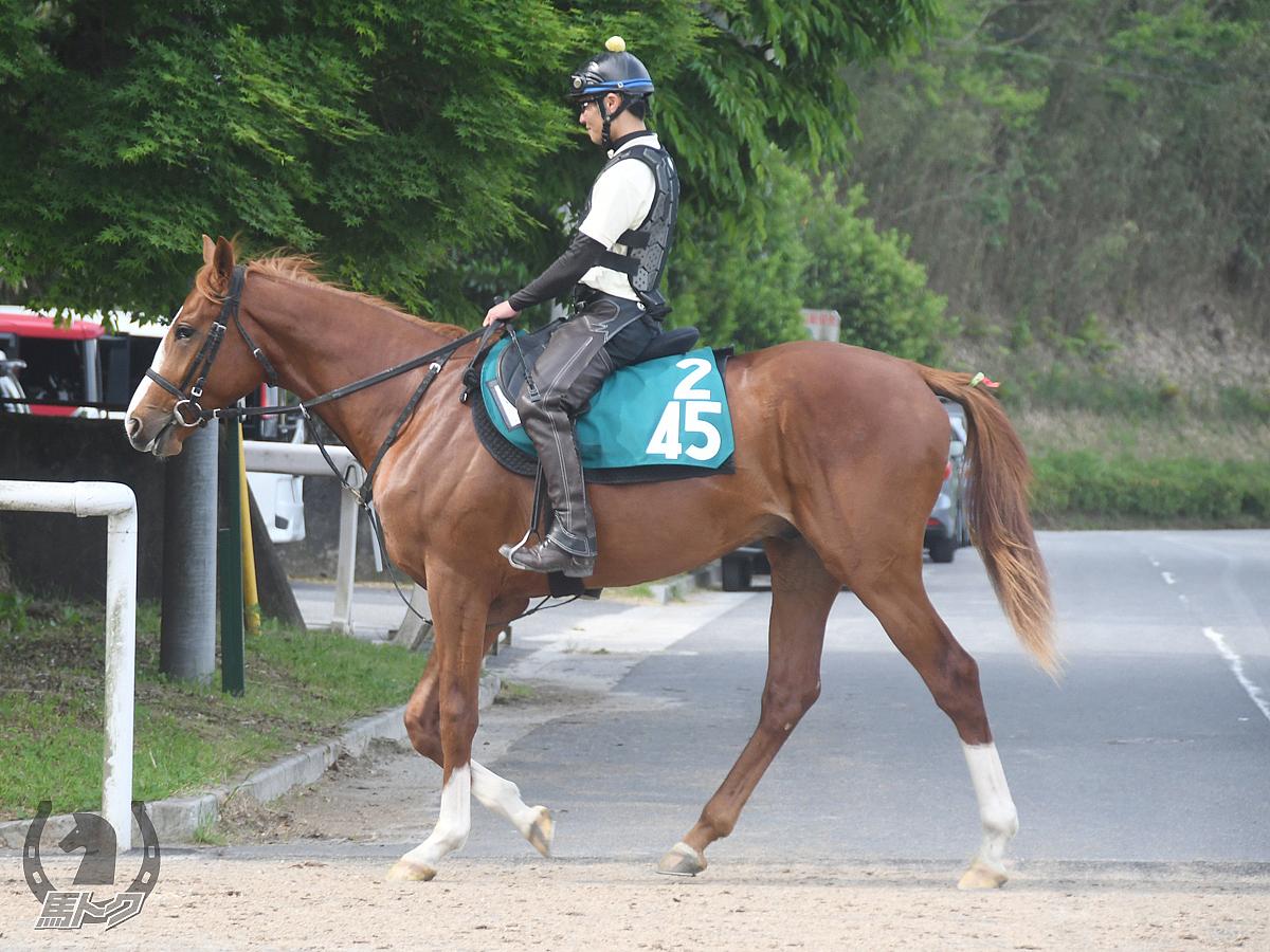 トーヨーダッシュの馬体写真