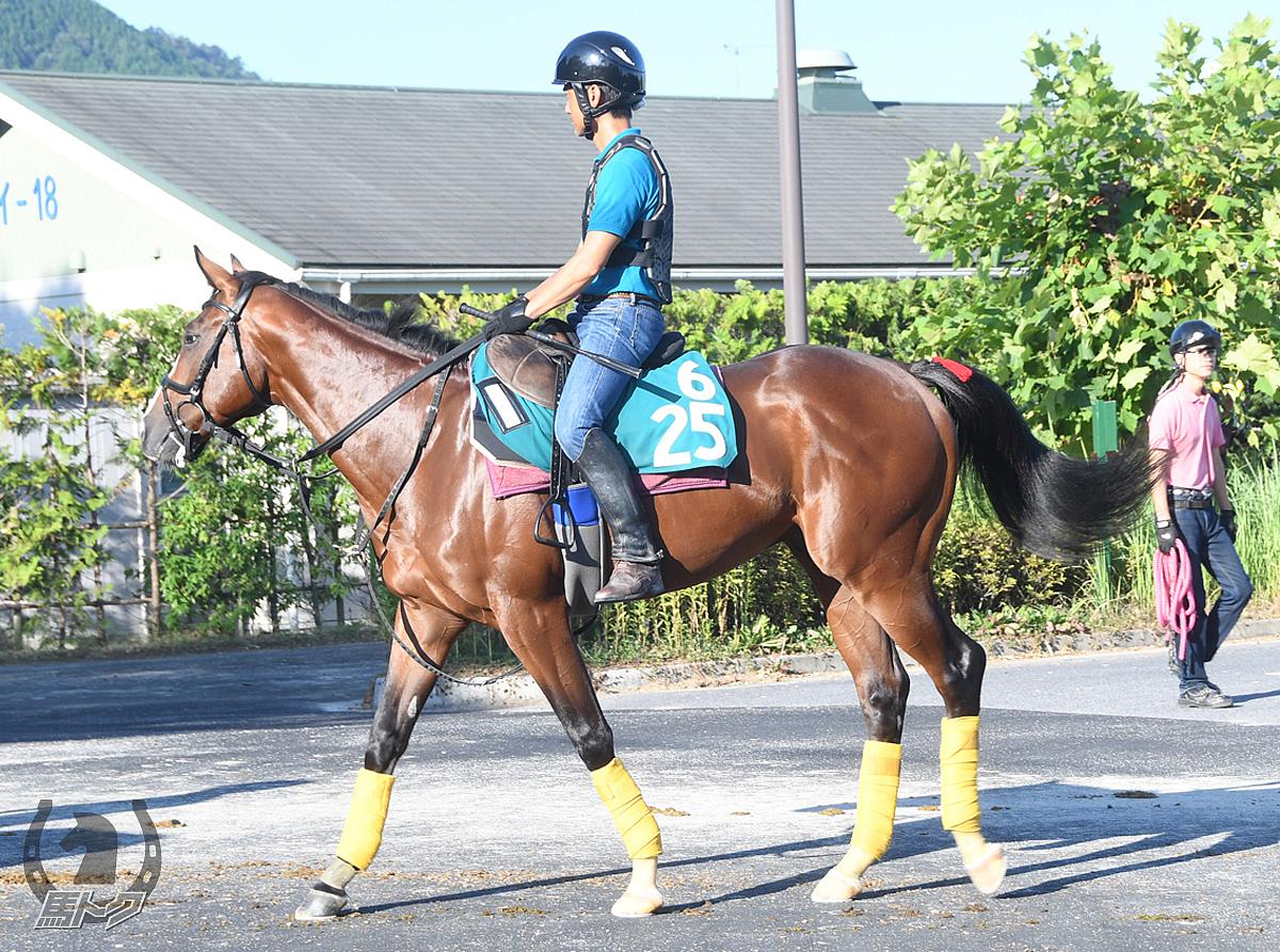プラネットアースの馬体写真
