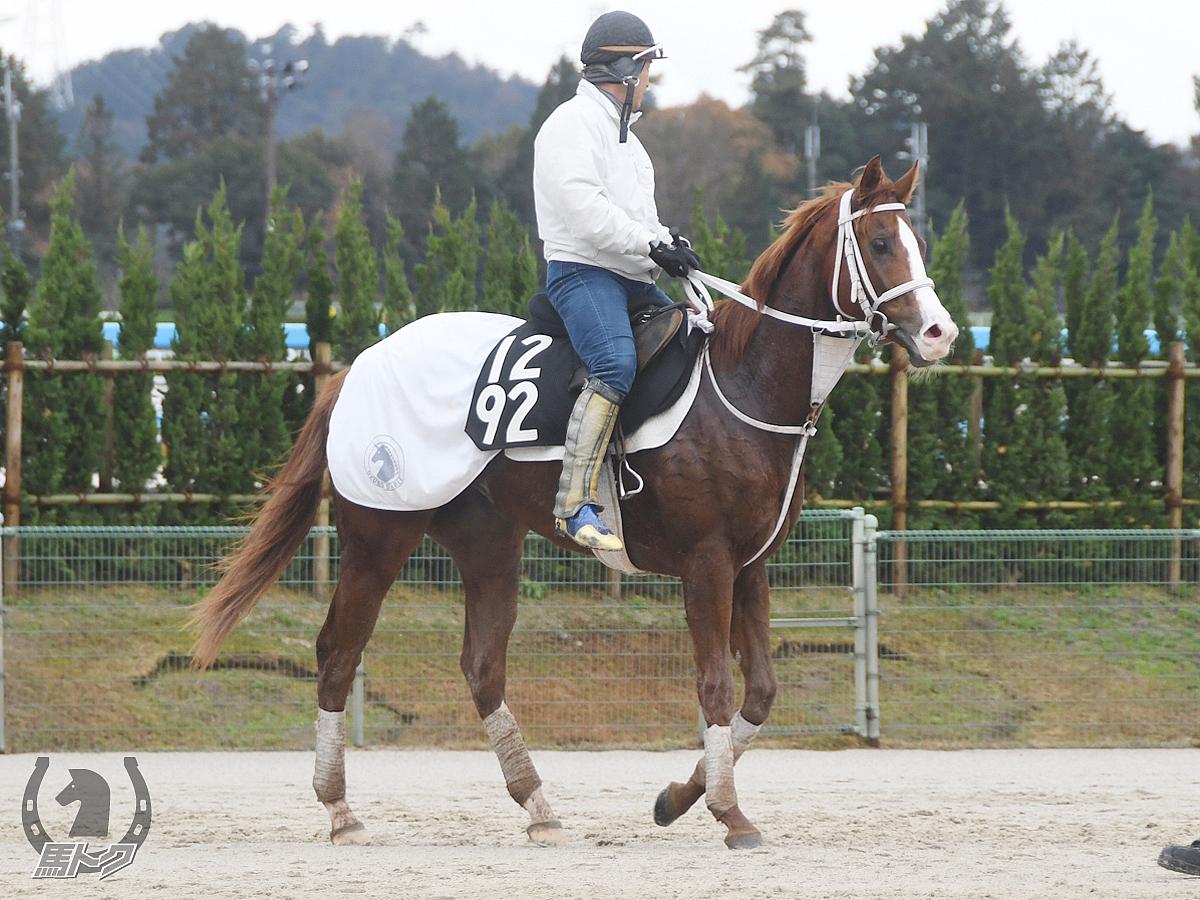 ニューウェーブの馬体写真