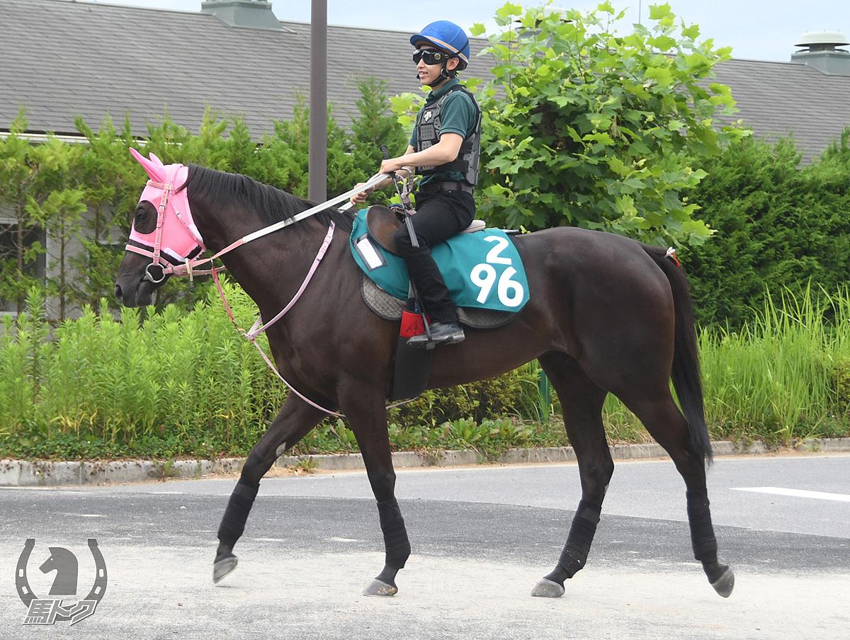 ダンツジュエルの馬体写真