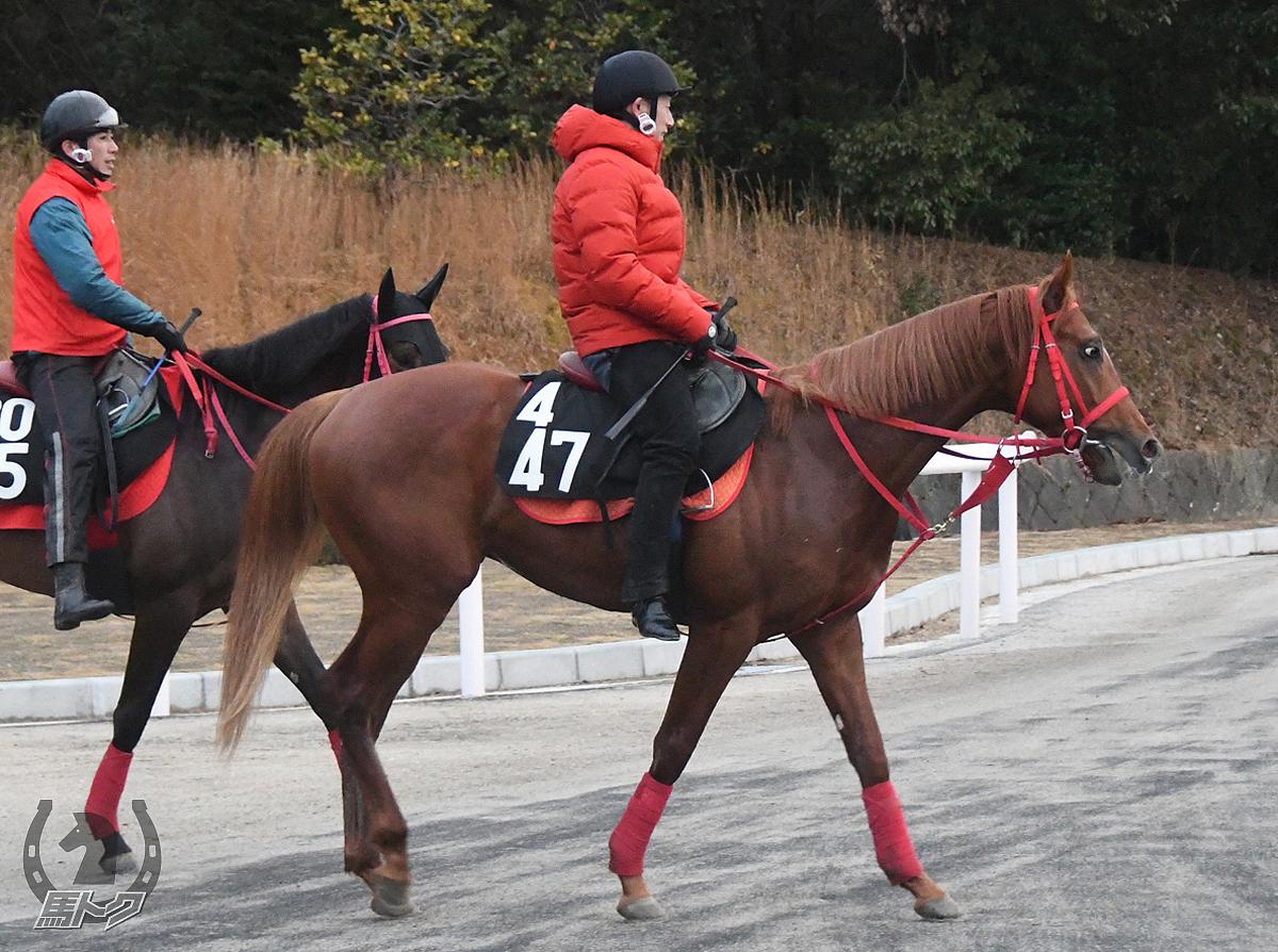 ジュゼッペレオの馬体写真