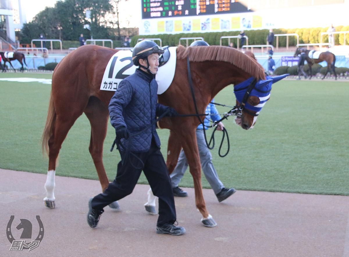 カガコルヴェヤの馬体写真
