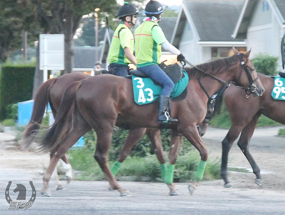 シャイリースマイルの馬体写真