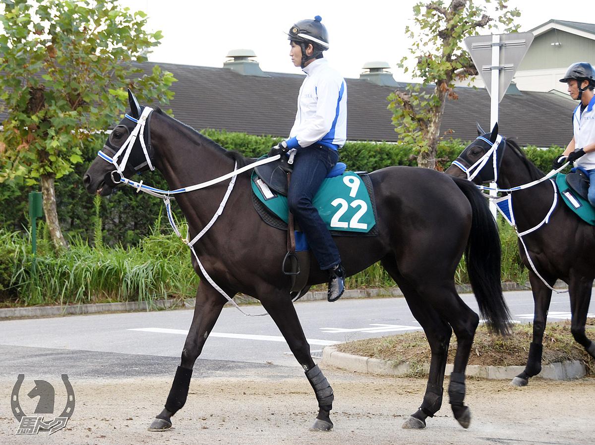 スマートモリガンの馬体写真
