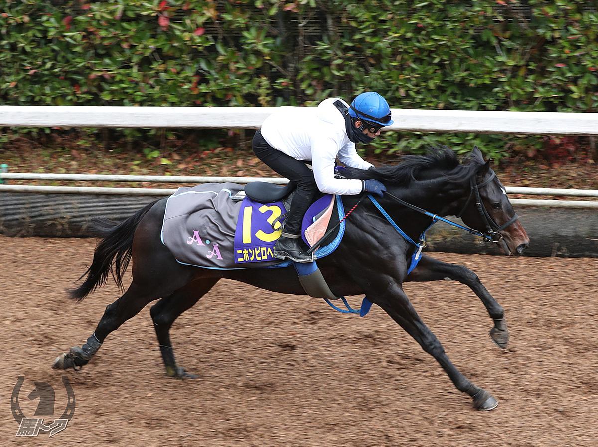 ニホンピロヘンソンの馬体写真