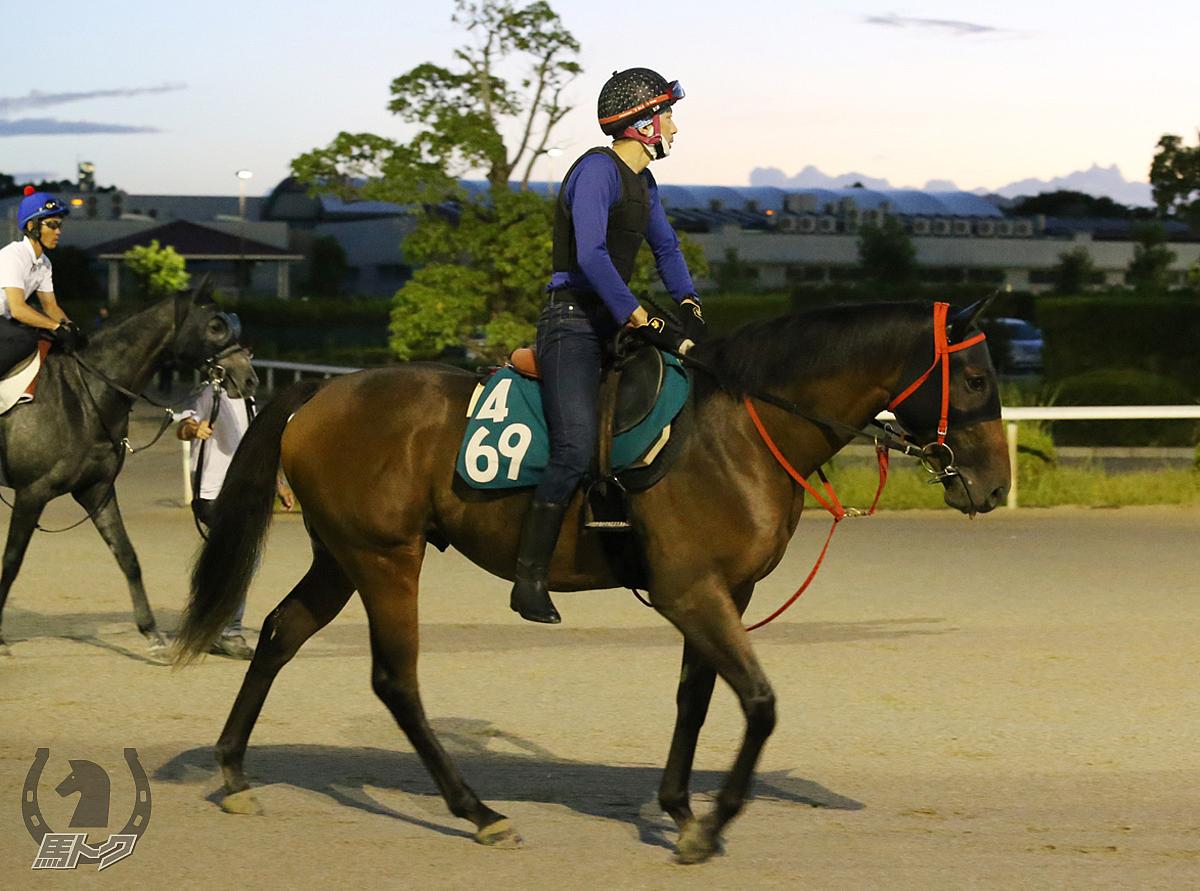 ニホンピロキングズの馬体写真