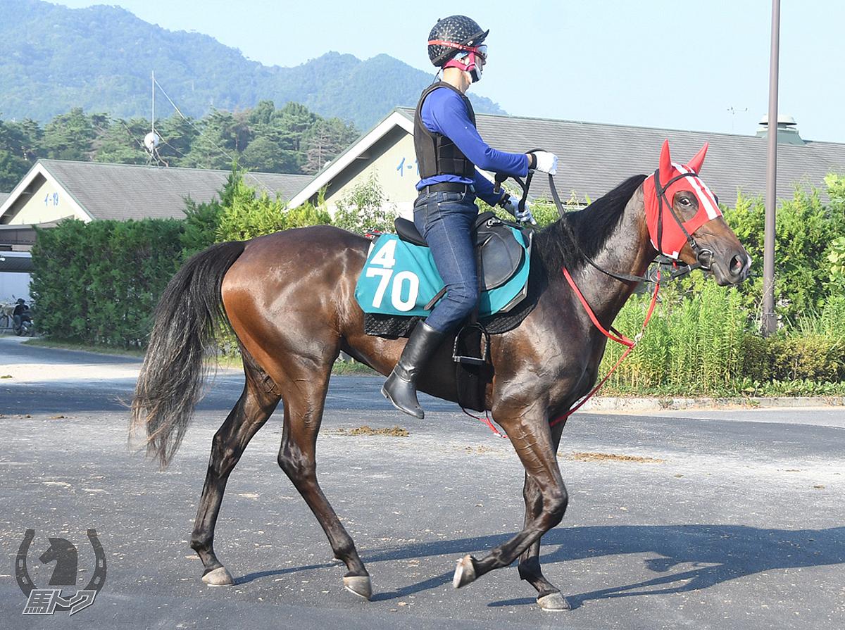 ニホンピロアメリアの馬体写真
