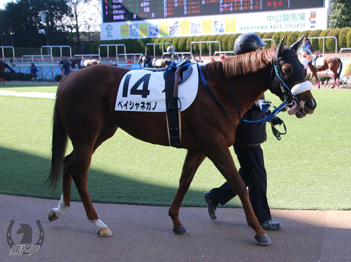 ペイシャネガノの馬体写真