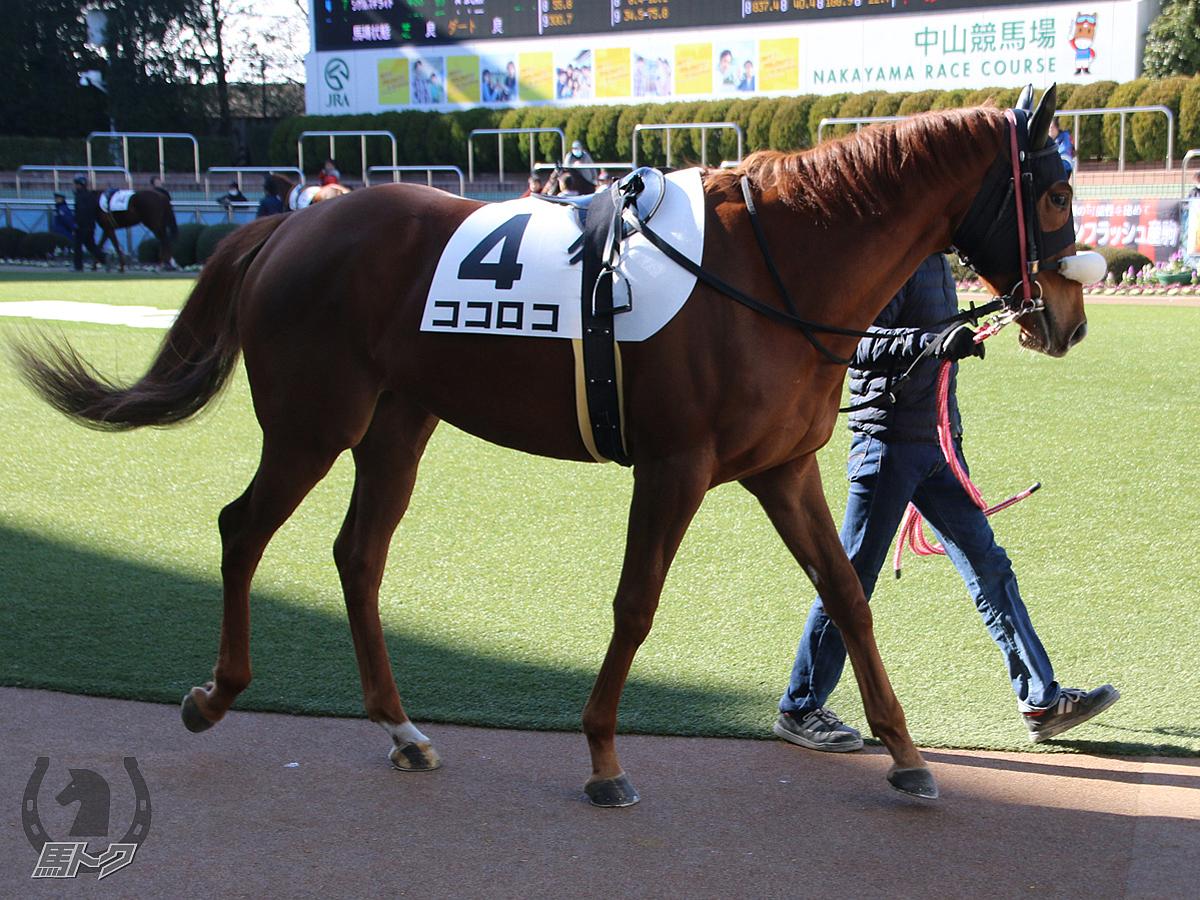 ココロコの馬体写真