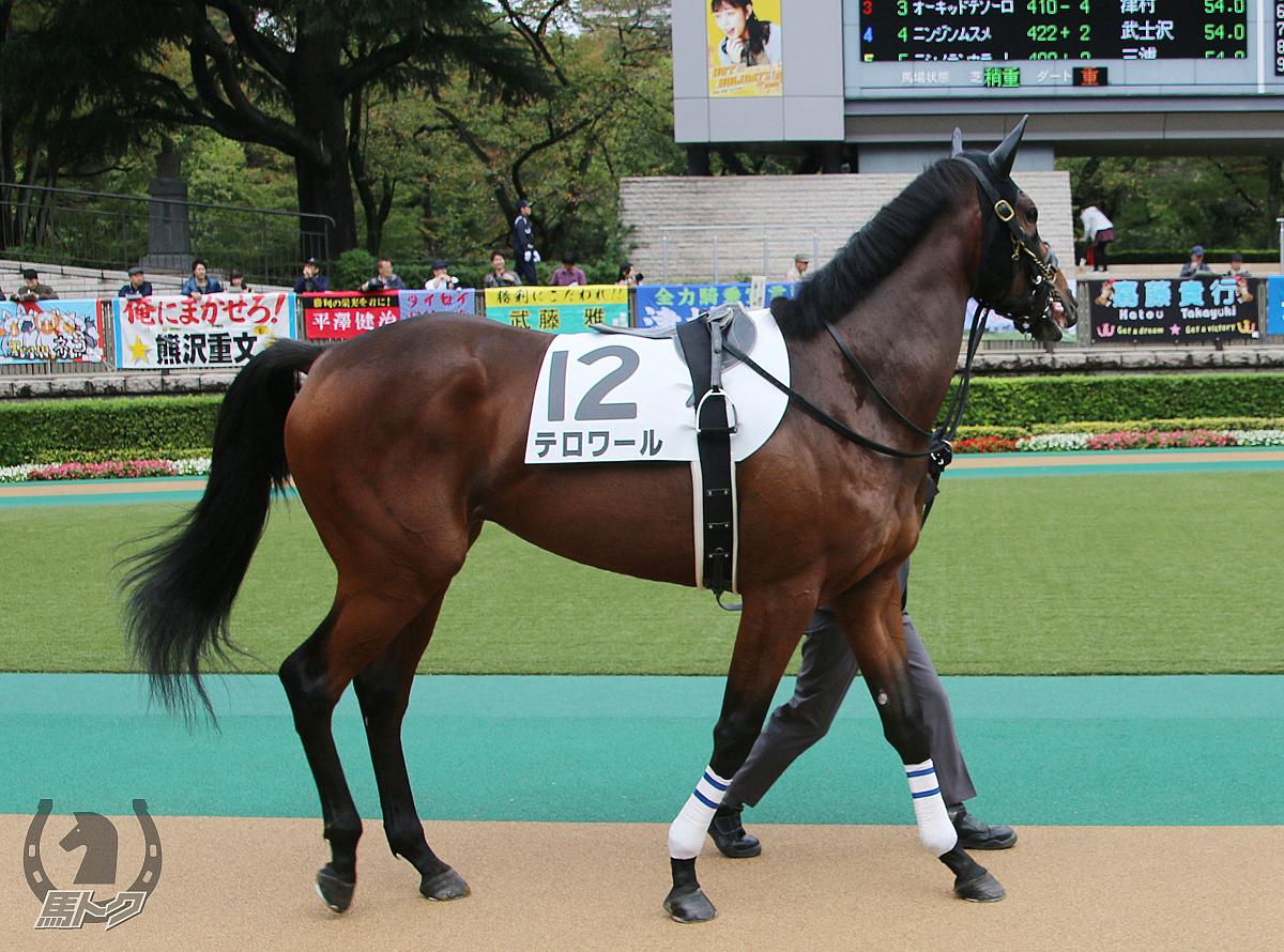 テロワールの馬体写真