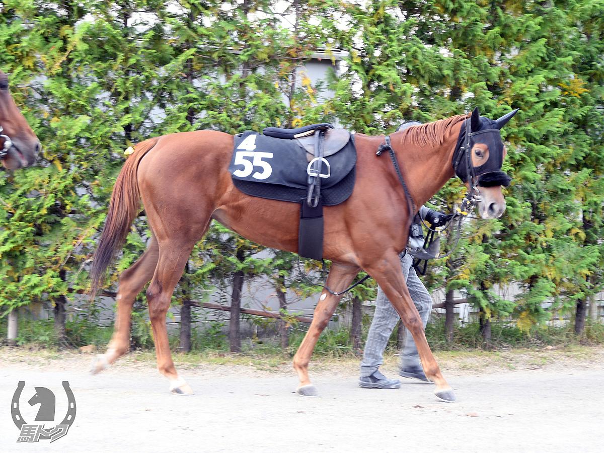 ジューンサニーの馬体写真