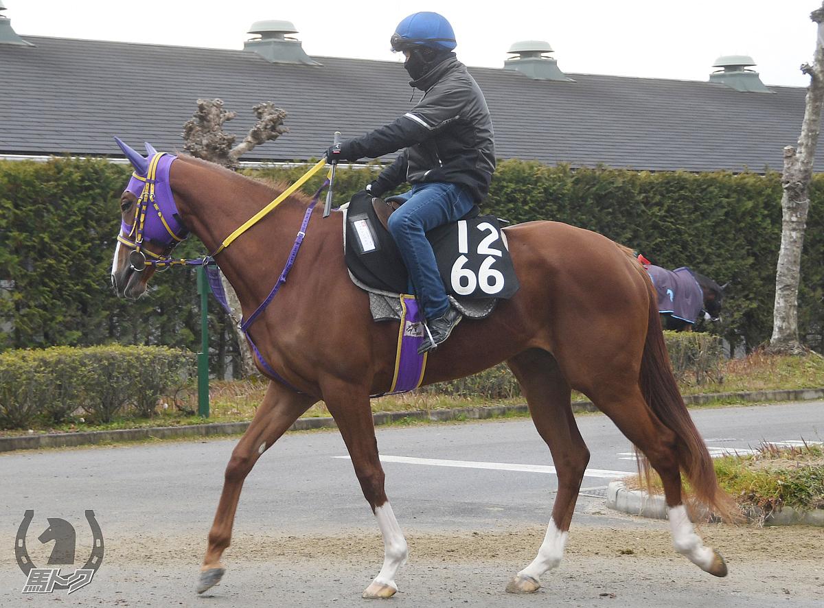 ショウナンパルコの馬体写真