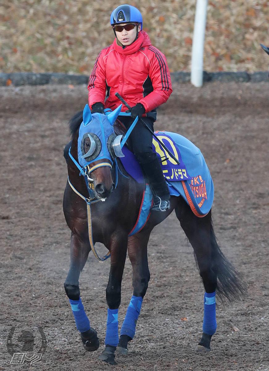 タニノドラマの馬体写真