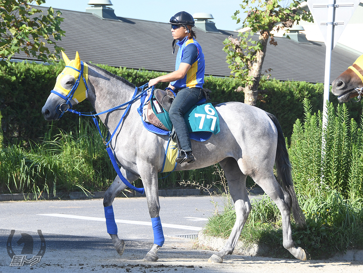 リッカローズの馬体写真