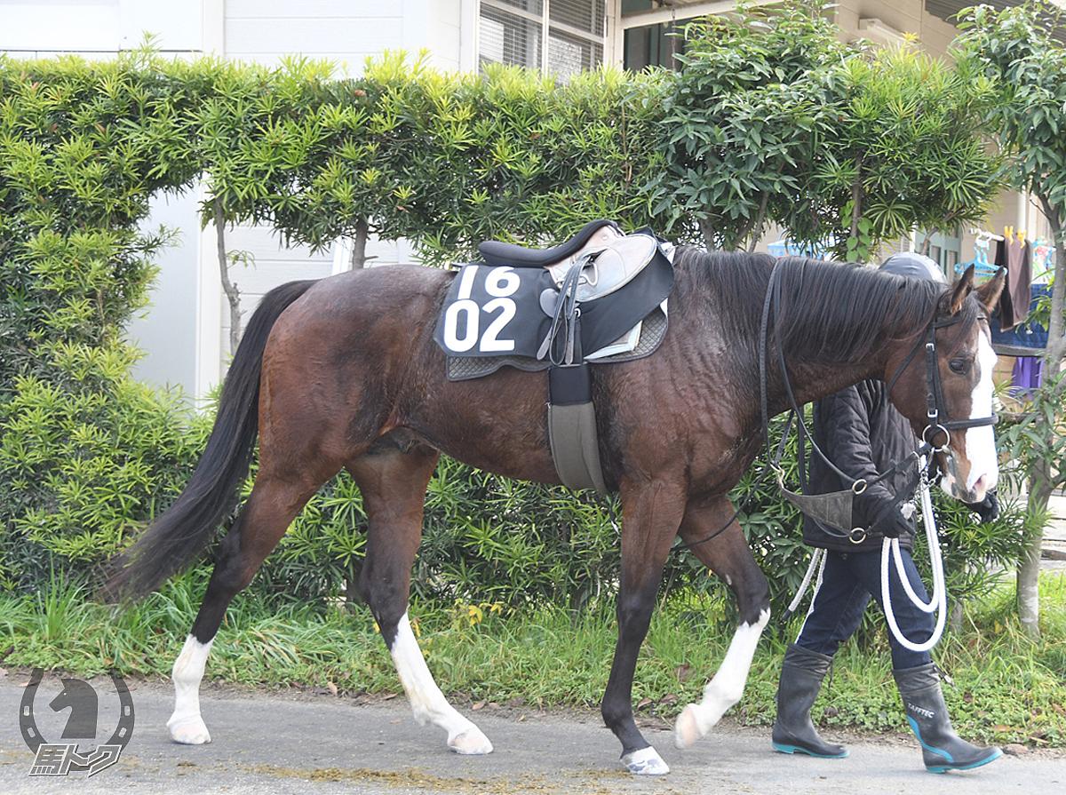 リッカシップの馬体写真