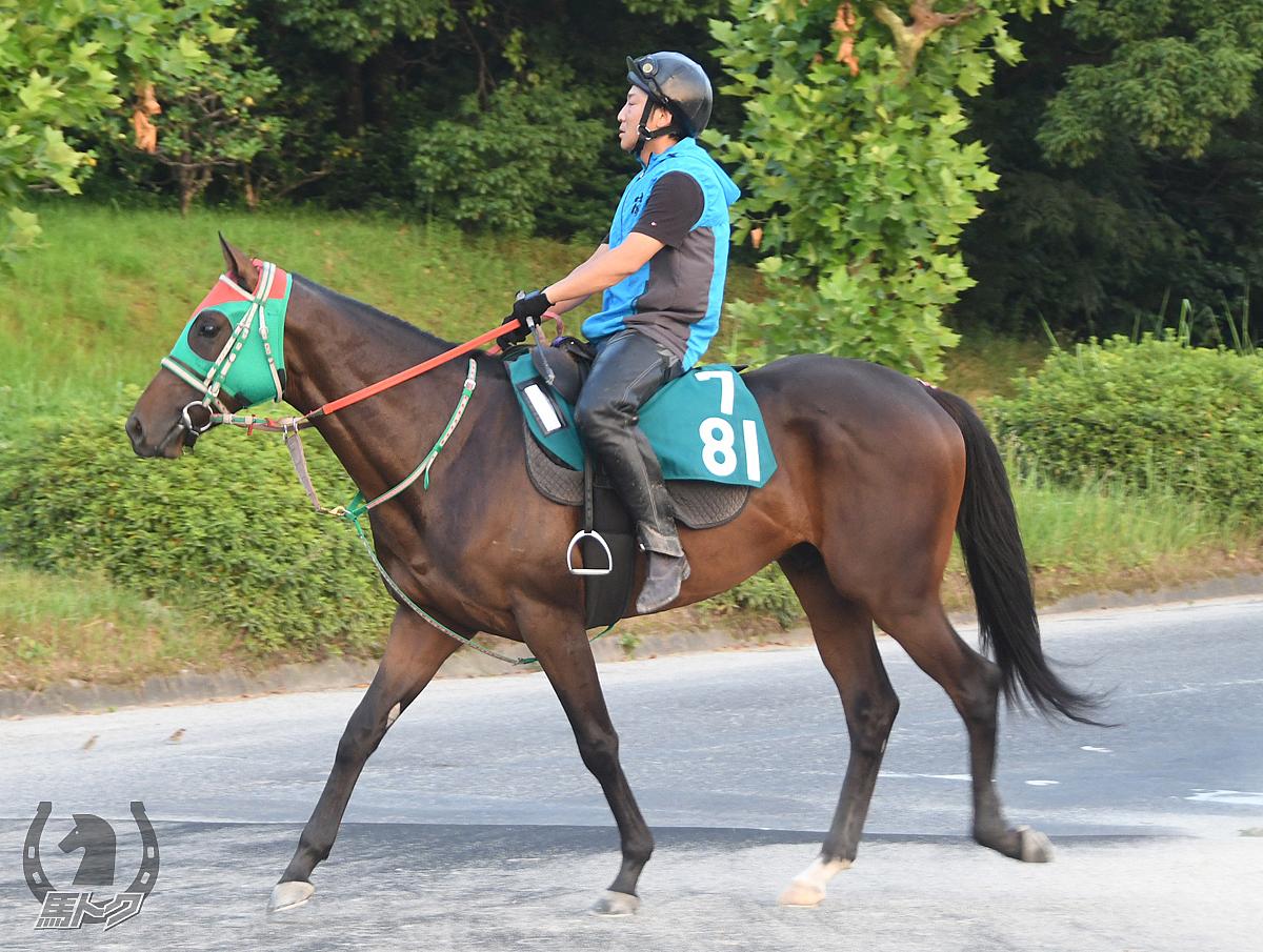 テイエムカイリキの馬体写真