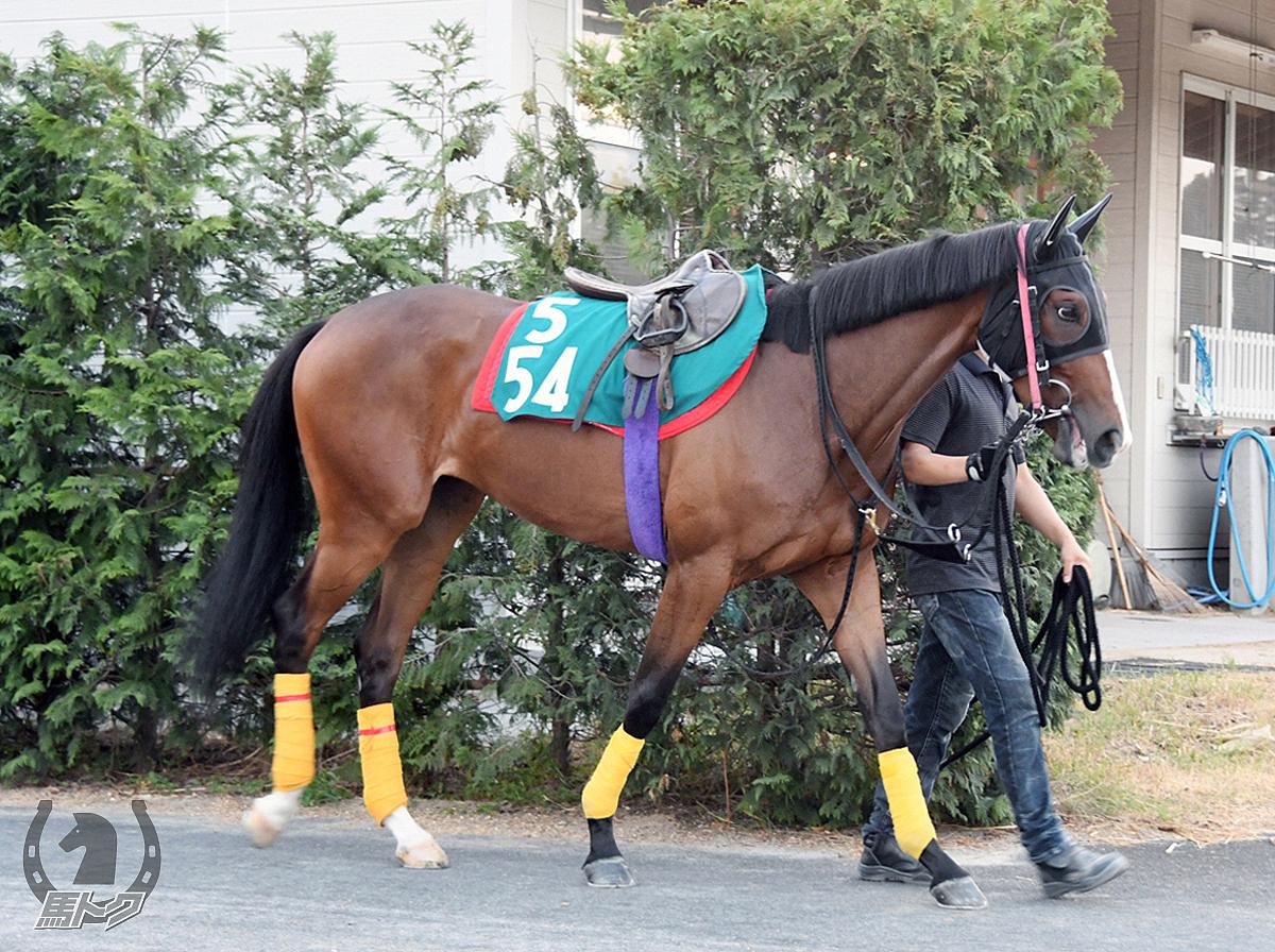 アイファーキャノンの馬体写真